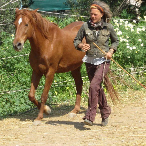 , Mit Pferden im Hier und Jetzt, Pansliste, Pansliste