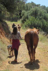 , Ost Kreta Mit Pferden im Hier und Jetzt, Pansliste, Pansliste