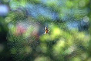 Krafttier Spinne, Das Krafttier Spinne – Die Weberin der Zeit und des Schicksals