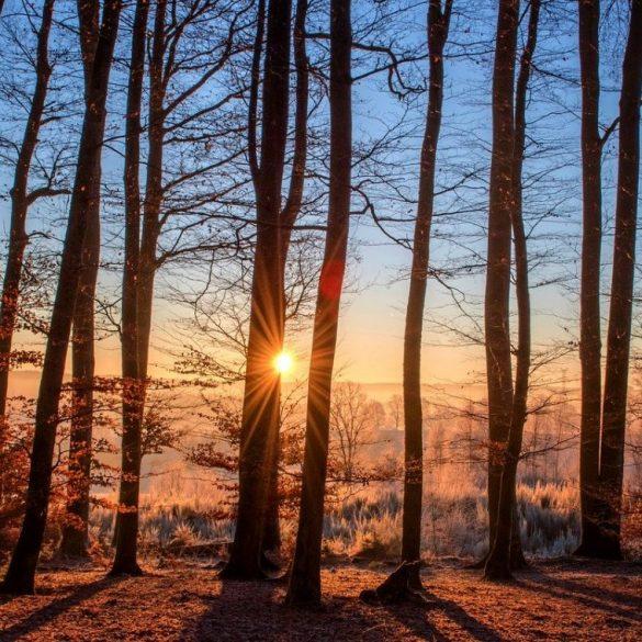 , Imbolc – der Sieg des Lichts über die Dunkelheit (2.Februar), Pansliste