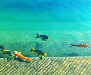 , Sternzeichen Fische vom 20. Februar bis 21. März, Pansliste