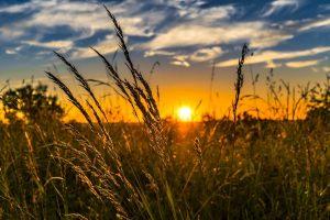 , Sommersonnenwende – Das Mittsommerfest – LITHA, Pansliste