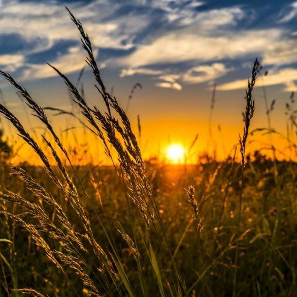 , Sommersonnenwende – Das Mittsommerfest – LITHA, Pansliste, Pansliste