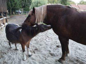 , Tierliebe als Weg zur Selbstliebe, Pansliste