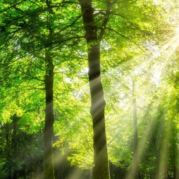 , Atem – Energie- Prozessbegleitung, Pansliste